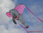 X-Kites 3D Olifant