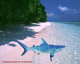 HQ Ocean Mobile Shark