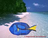 HQ Ocean Mobile Blue Tang