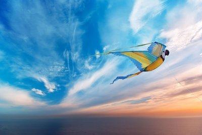 WindNSun 3D Macaw