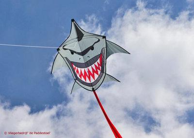 CIM Buddy Shark