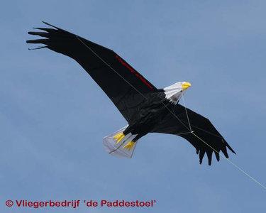Premier Kites Giant Bald Eagle Kite
