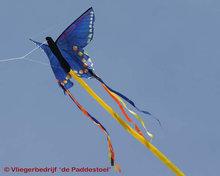 HQ Butterfly Blue Swallowtail 'S'