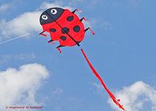 HQ Flapping Lillie Ladybug