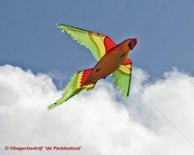 HQ Parrot 3D